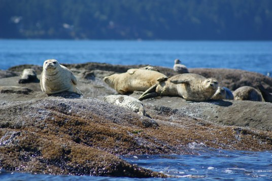 Seals basking in the sun.