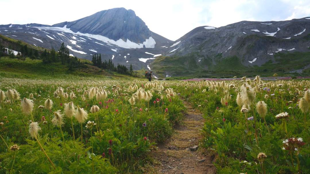 Hiking through wildflowers by Astor Lake.