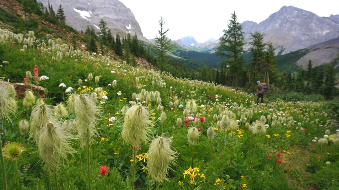 Hiking through a wildflower filled alpine meadow.