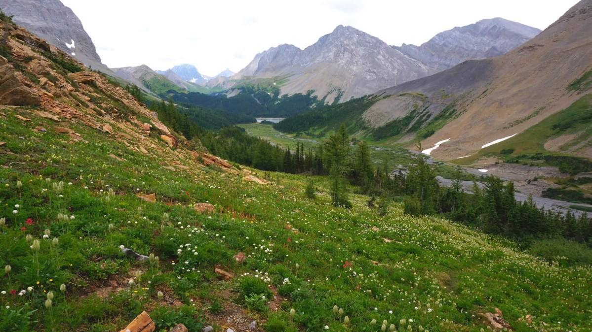 The Complete Guide To Hiking Northover Ridge in Alberta, Canada