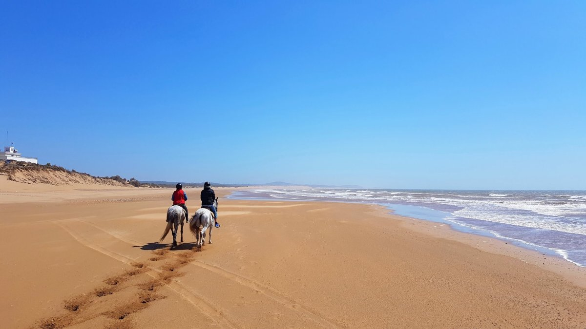 5 Tips For Booking Ethical Horseback Riding Tours While Traveling