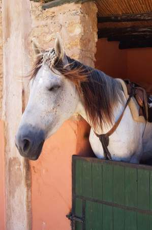A relaxed, healthy looking horse.