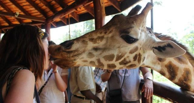 cropped-giraffe.jpg