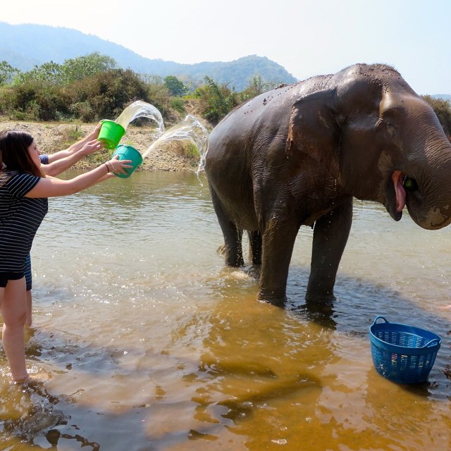 Bathing an elephant at Elephant Nature Park in Chiang Mai.