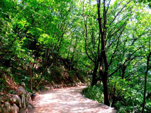 seokguram grotto walk