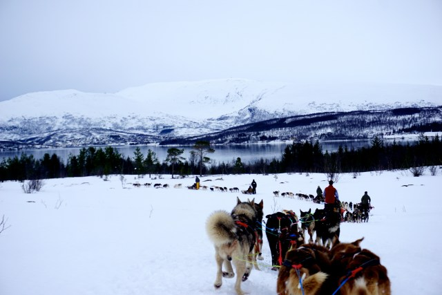 hurtigruten ms lofoten round voyage crossing the arctic circle tromso dog sledding