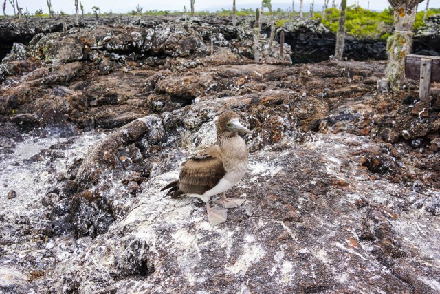 three days on isla isabela galapagos islands los tuneles