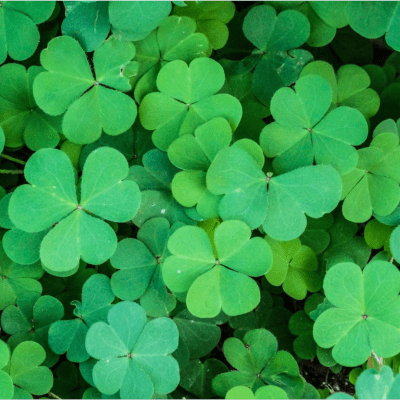 2018 St. Paddy's Guide: Celebrate the Luck of the Irish