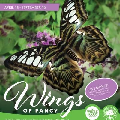 GIVEAWAY: Wings of Fancy