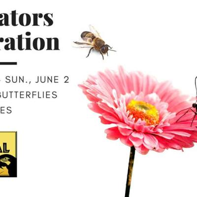 Pollinator Celebration!
