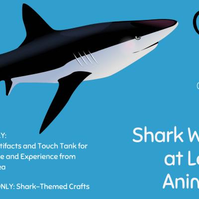 Shark Weekend at Leesburg Animal Park