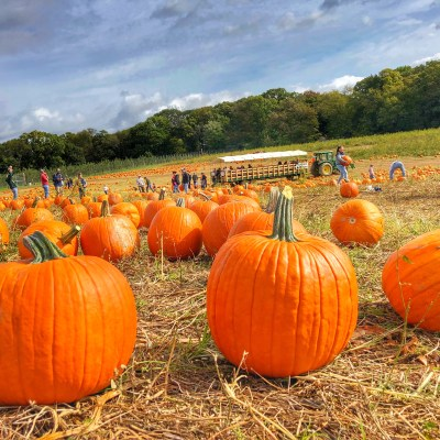 2019 Gaver Farm Fall Fun Fest