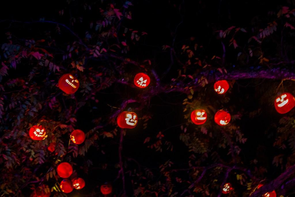 Jack-'o-lanterns tree