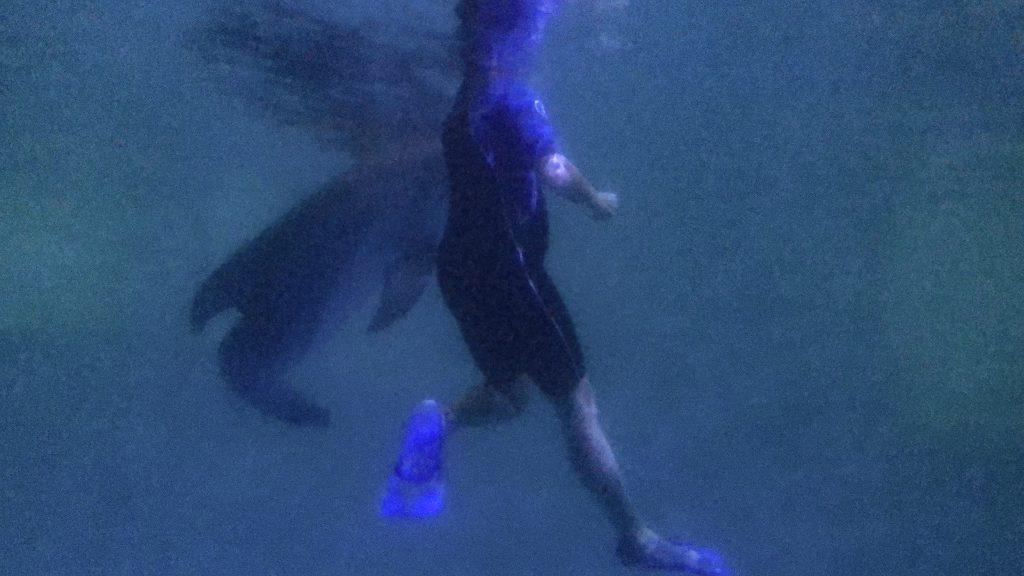 Winter underwater