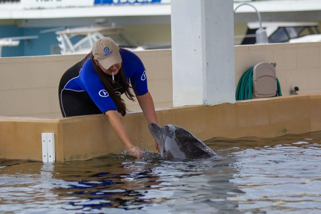CMA Dolphin talk