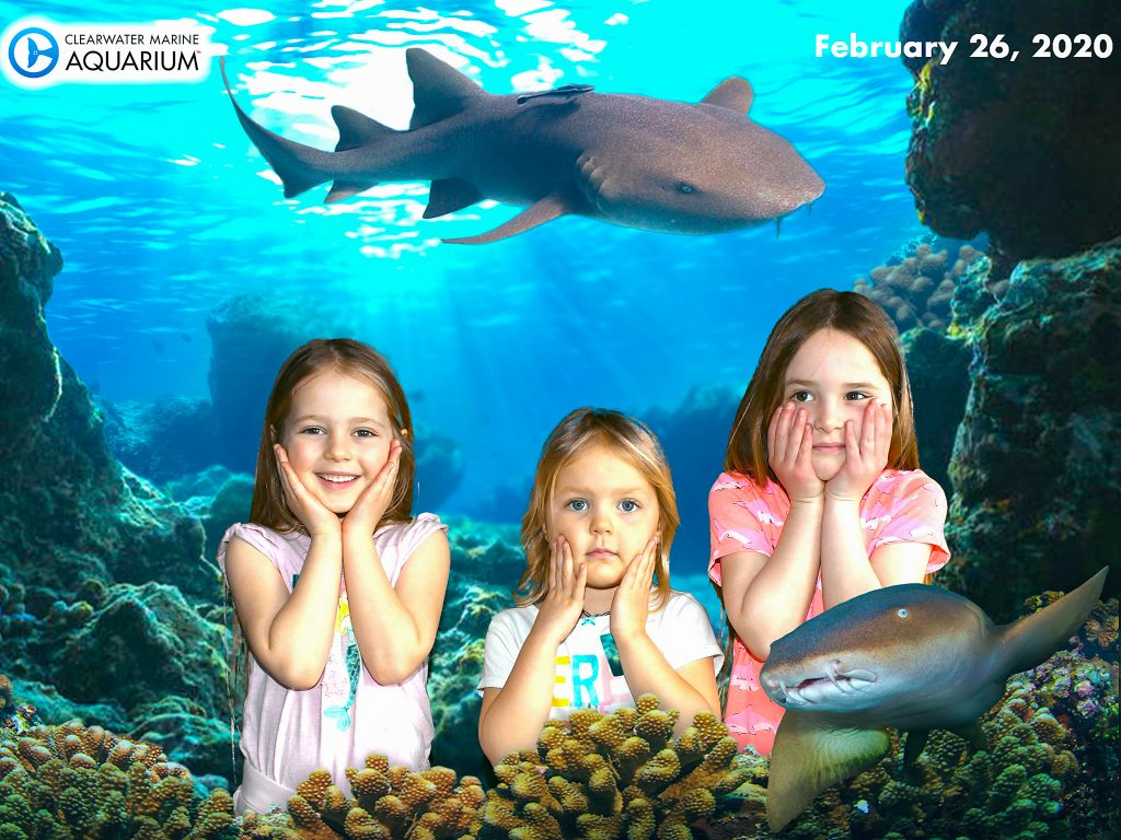 CMA Green Screen sharks