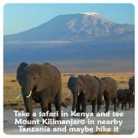 Safari Kilamanjaro