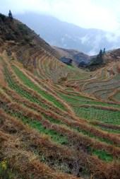 Dragon's Backbone Rice Terraces - Guangxi