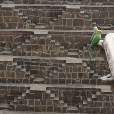 Abhaneri Chand Baori Step Well