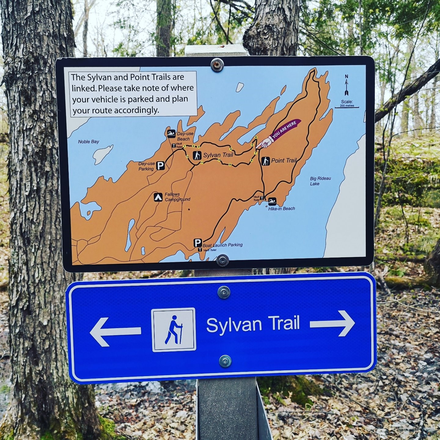 The Sylvan Trail- A 2 7k Hike at Murphy's Point Provincial
