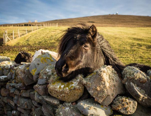 Sumburgh - Shetland (©Leading Lines)