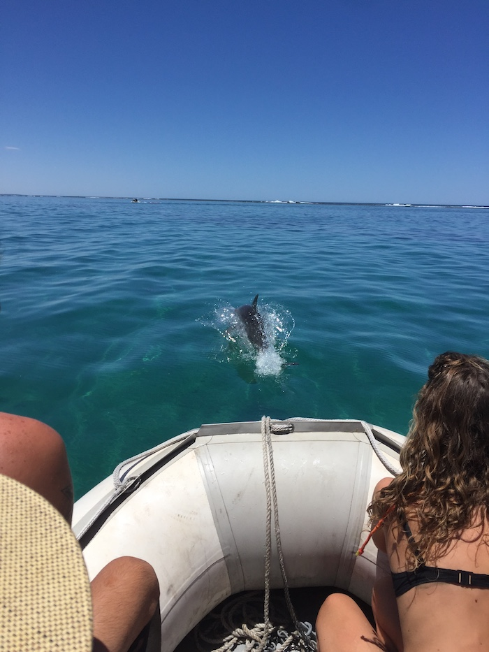 We came across a family of bottlenose dolphins as we were heading to the water slide.