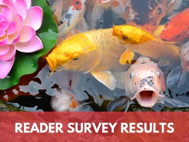 Adventures Around Asia Reader Survey Results