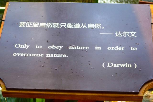 Fake Chinese Darwin quote