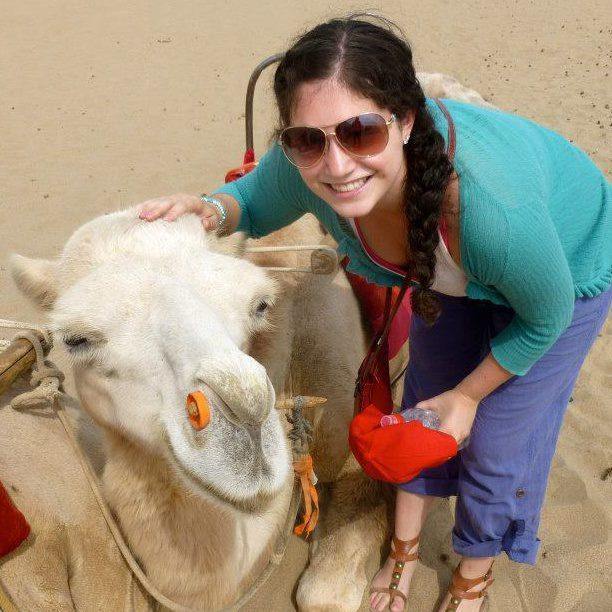 camels gobi desert