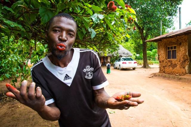 Lipstick plant Zanzibar