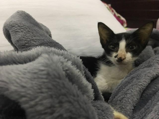 fostering cat Vietnam