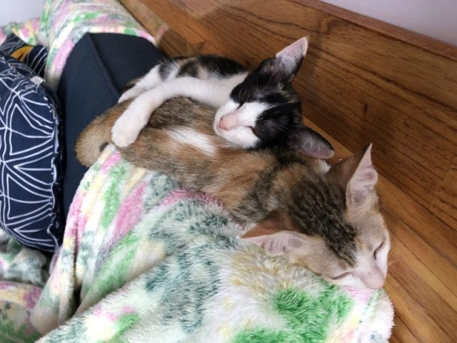 Jacks Cat Cafe foster