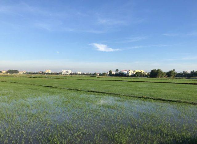 Campi di riso di Hoi An