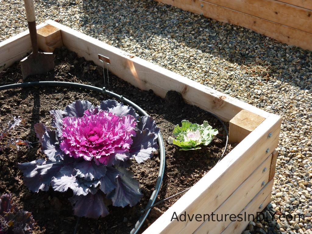 Raised Garden Watering Ideas
