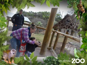Giraffe feeding photos. San Antonio Zoo photo package