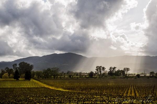 The Wine Road Leads to Lodi, CA