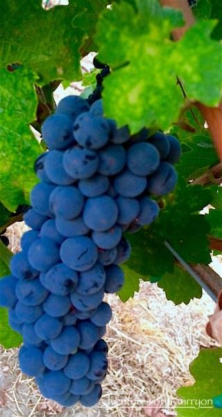 m2 Wines Abide