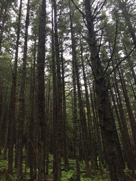 skagway cruise excursion hiking in the denver wilderness