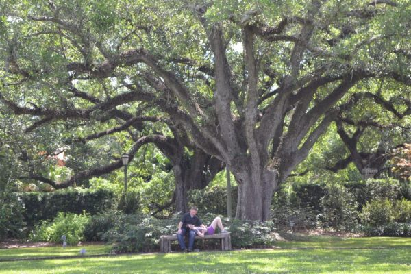City park is full of amazing oak trees making it the perfect relaxing free date idea! You can also grab beignets and coffee at Cafe du Monde for a great budget friendly date idea! See more great date ideas around new orleans that are free at Adventuresofb2.com
