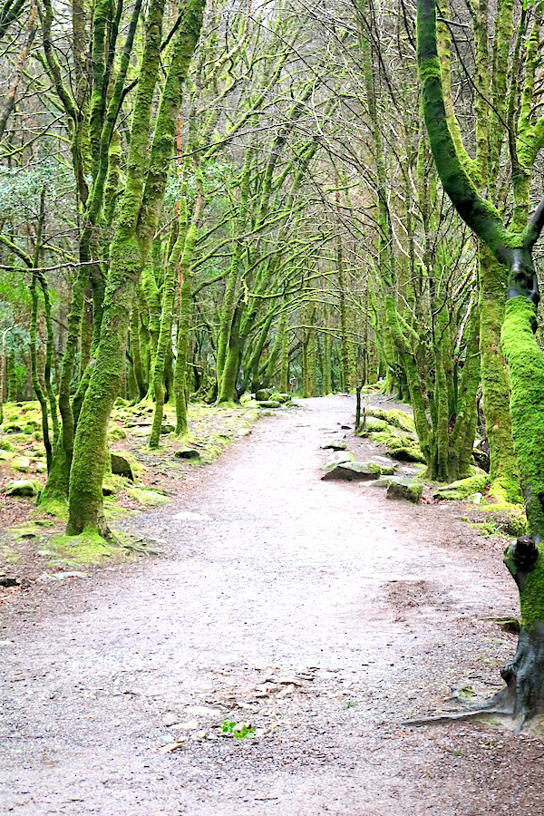 How mesmerizing are these trees in Ireland. Don't just drive along the ring of Kerry but get out and explore the hiking trails as you make your way around Ireland on your road trip. See a 10-day itinerary here- Adventuresofb2.com