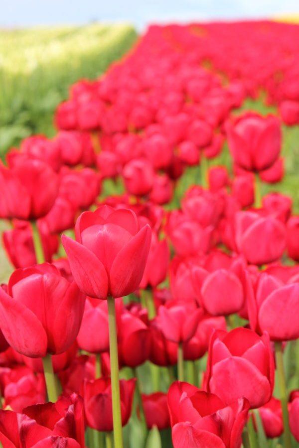 spring flower display