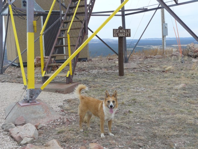 At the base of the lookout tower, but not quite the highest point on Elk Mountain.