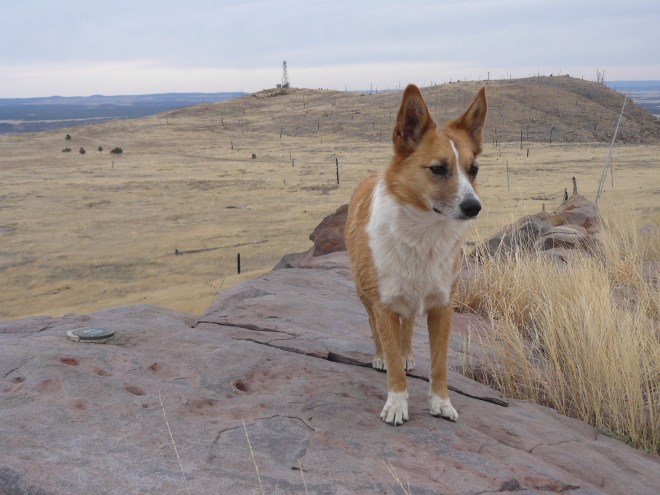Lupe at the Elk Mountain benchmark. The lookout tower can be seen in the distance. The magnificently colored rock is at the highest black dot on the high ground near the right of the photo.