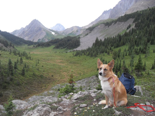 Lupe at South Kananaskis Pass and the view NW into British Columbia.