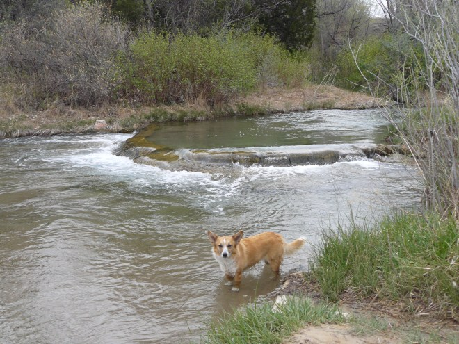 Lupe in the warmish mineral waters just upstream of Cascade Falls.
