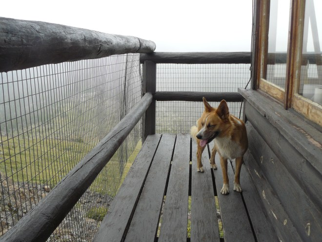 Lupe on the Sheep Mountain lookout tower.