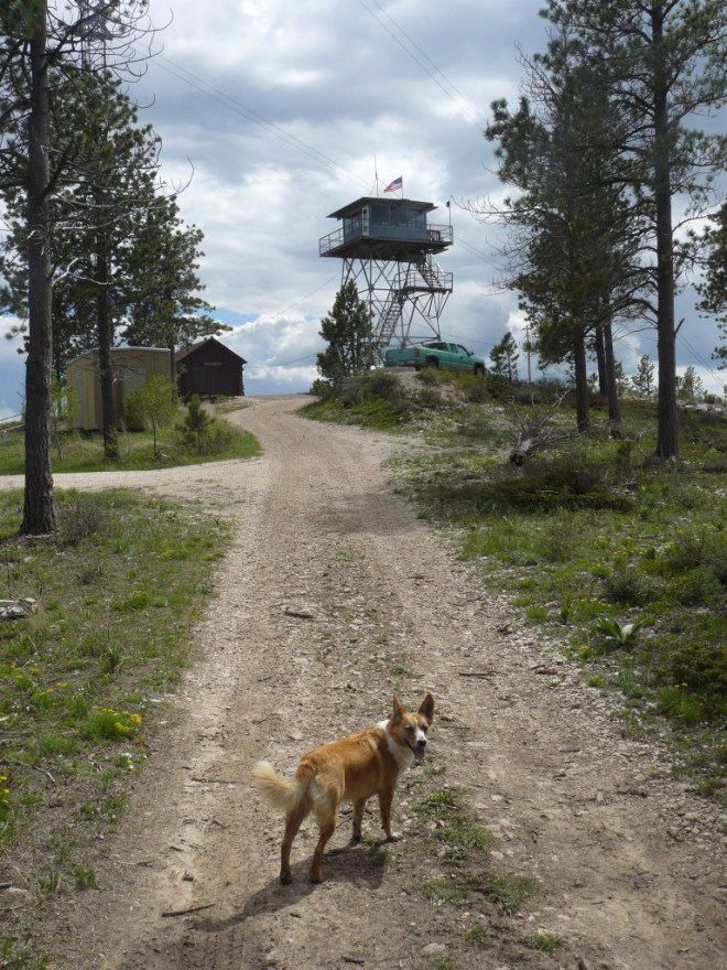 Lupe approaches the ranger tower on Bear Mountain.