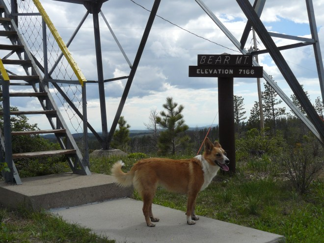 Lupe climbed the Bear Mountain ranger tower and spent a while relaxing up there while SPHP chatted with the ranger.