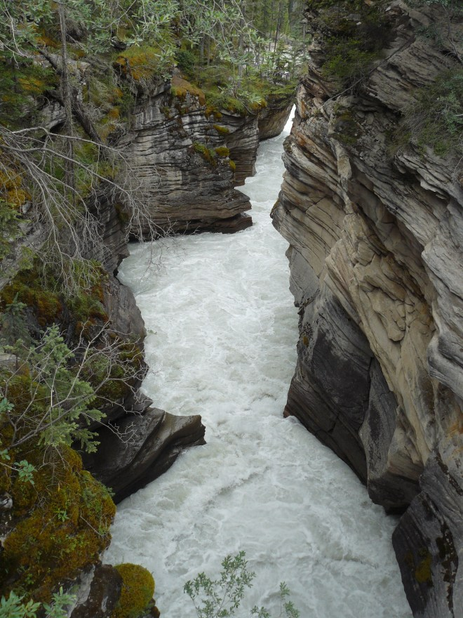 The Athabasca River has carved a narrow canyon right through the rock below the falls.
