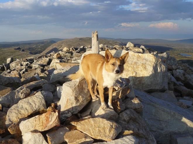 Lupe on the summit of Medicine Bow Peak. Photo looks NE towards Browns Peak.
